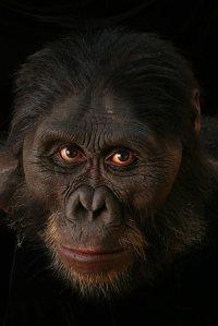 Australopithecus-afarensis-1