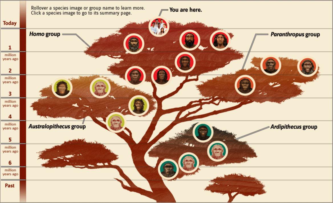 evolutionary-tree-of-life