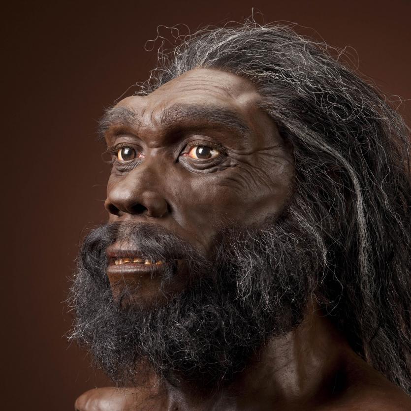 heidelbergensis_jg_recon_head_cc_3qtr_lt_sq