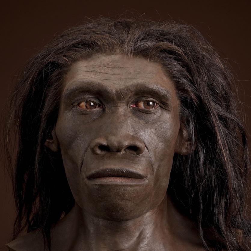 homo-erectus-reconstruction